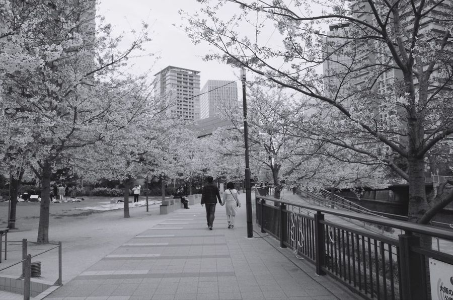 Sakura Tree Real People Nature People Streetphoto_bw Tokyo Street Photography Hanami Japan Photography Blackandwhite Photography Snapshots Of Life Monochrome Black And White City Beauty In Nature