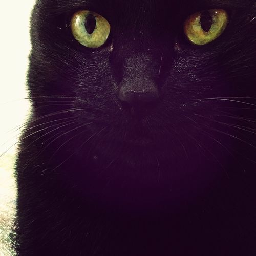 あついわね。 うちの猫 Cat So Hot