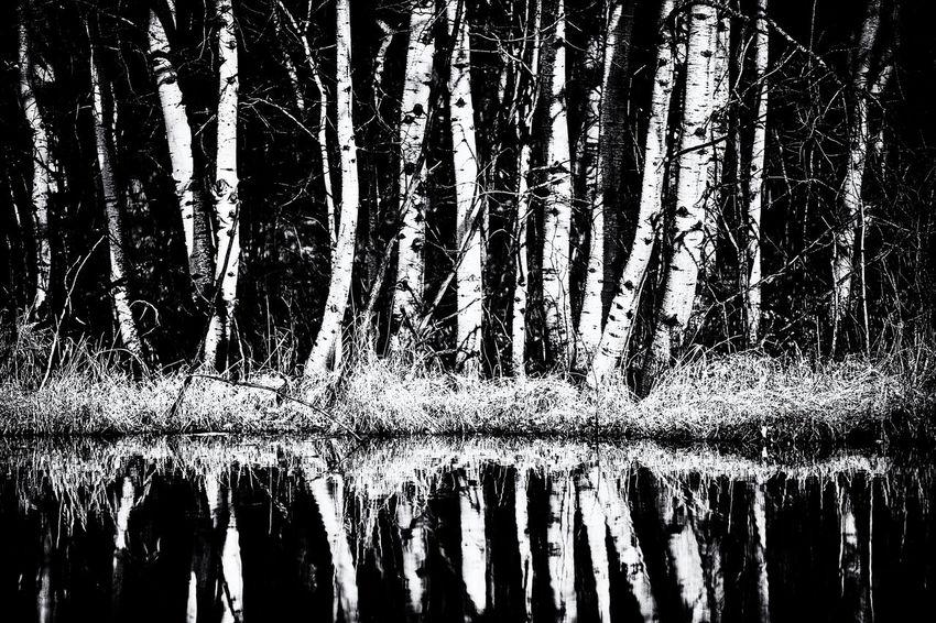 Reflections of Spring in Monochrome B&w B&W Portrait Monochrome Nature Reflection Spring Tree Water WoodLand