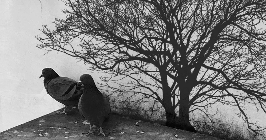 homeless Pigeons Birds Deforestation One Animal Bird Animal Themes Animal Wildlife Animals In The Wild No People Branch Outdoors Day Tree Perching Domestic Animals Nature