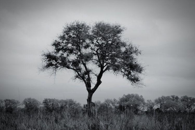 Nikon Trees