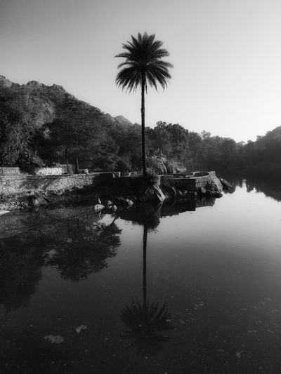 Scenic view of palm trees by lake against sky
