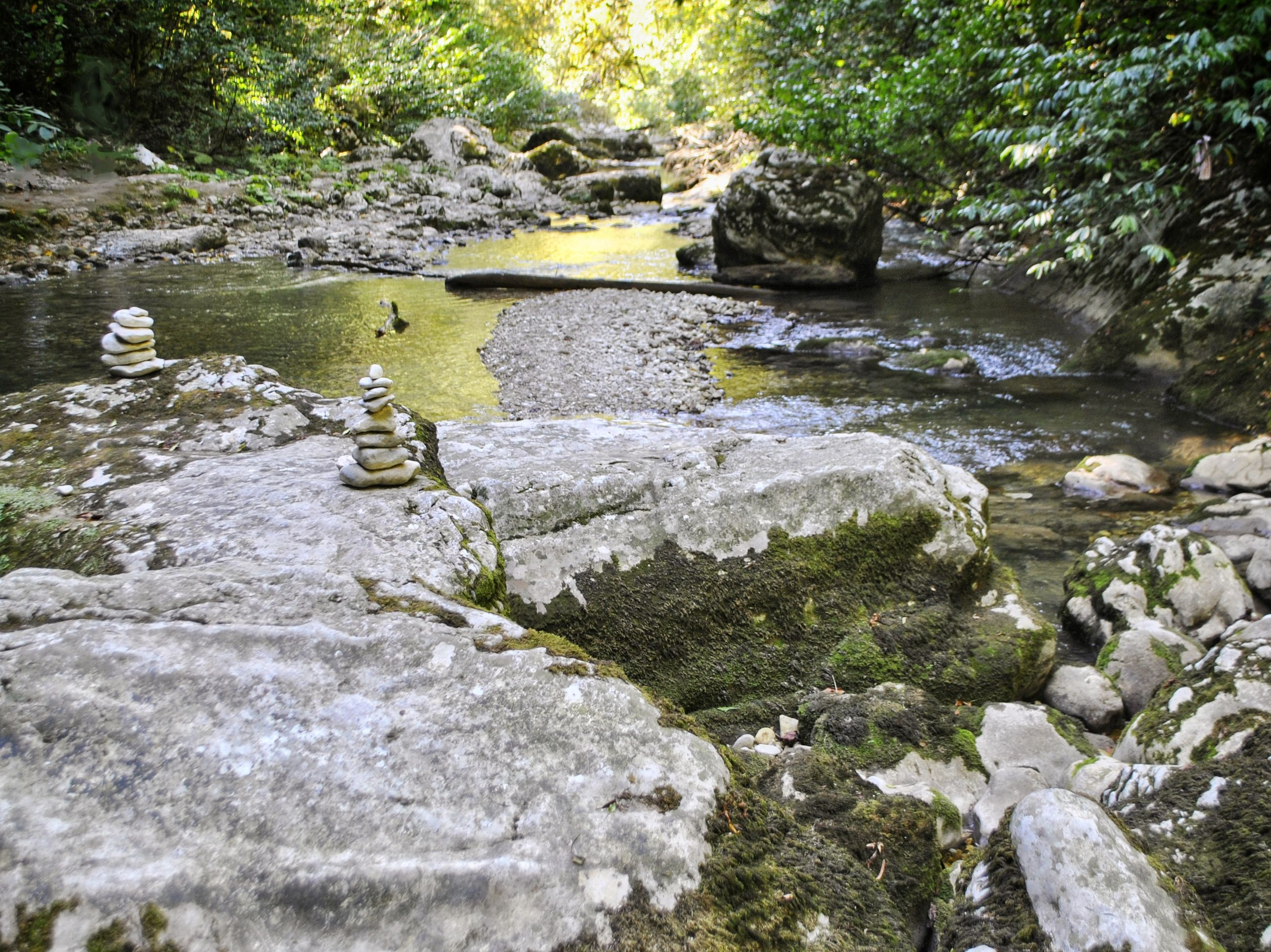 water, rock, solid, nature, rock - object, plant, stone, day, river, no people, beauty in nature, flowing water, stream - flowing water, tree, tranquility, forest, land, stone - object, flowing, outdoors, shallow