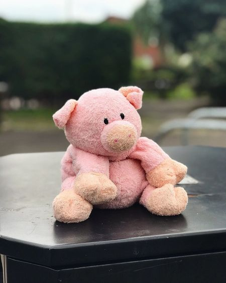 Pig in the city. Stuffed Toy Teddy Bear Toy Animal Representation No People Childhood Focus On Foreground Close-up Indoors  Day Pig Pigs Pig In The City  Toys Toyphotography Outdoors Outdoor Stuffed Stuffed Toy Piggy Piggy Bank Depth Of Field Depth Depth Of Focus Focus