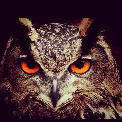 Spiritanimal Animalmessengers Shestheowl Sagittarius Day22getrealchallenge WelcomeFall