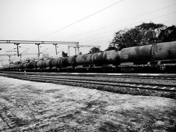 Tree Railroad