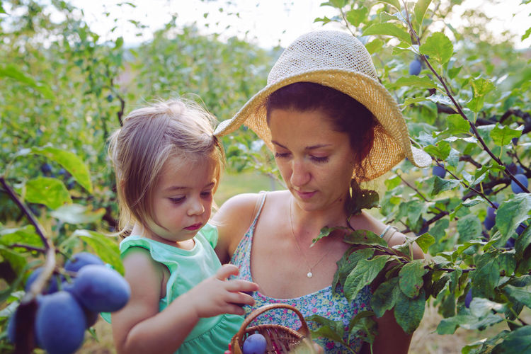 Mother and daughter picking fruits