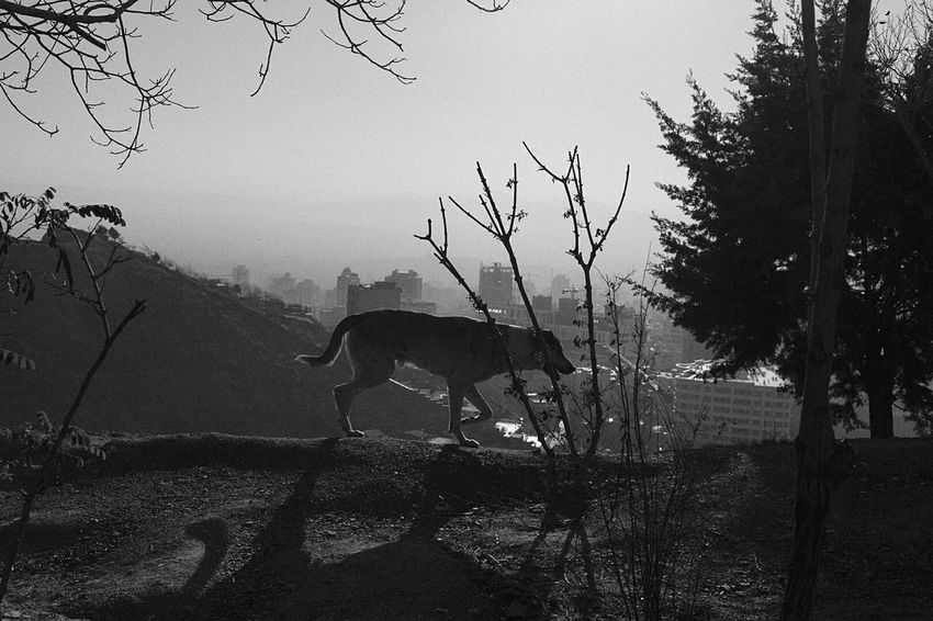 Showcase: December Travel Tochal Teheran from above Dog View Black And White Bw Monochrome Photography Shades Of Grey Stray Animal