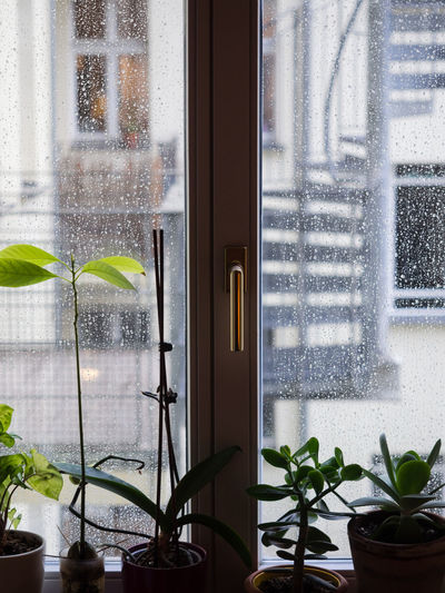 Potted plants seen through glass window