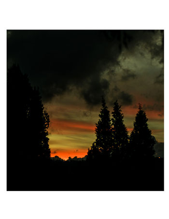 Tree Nature No People Scenics Silhouette Outdoors Beauty In Nature Growth Sunset Sky Day
