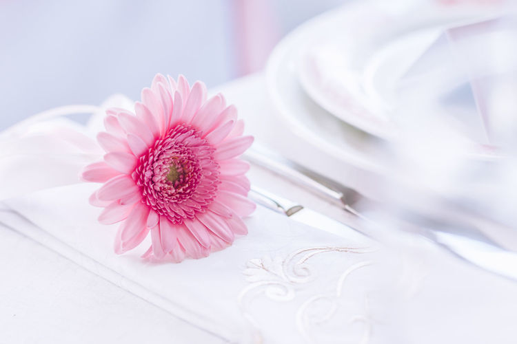 Celebration Event EyeEmNewHere Beauty In Nature Close-up Day Flower Flower Head Fragility Freshness Gala Indoors  Nature No People Petal Pink Color Plate Presentation Table White