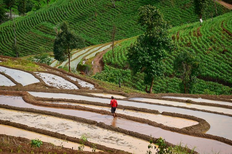 High Angle View Of Man Walking In Farm