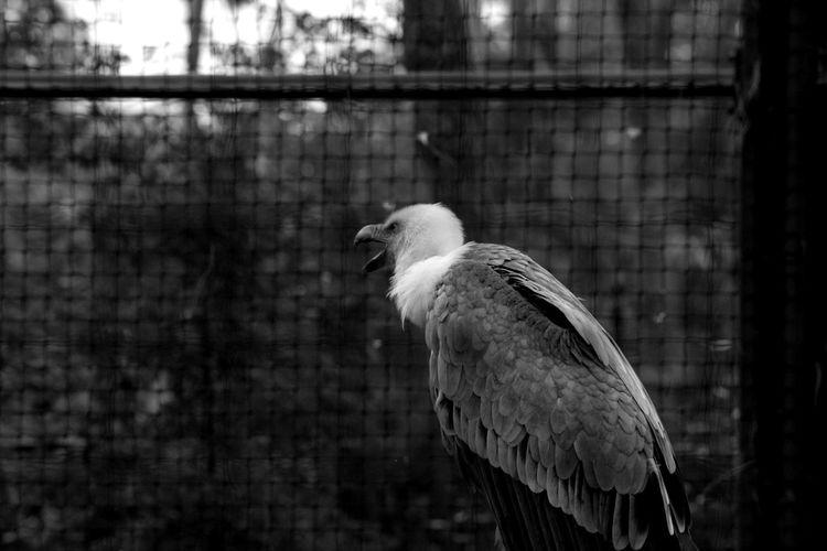 Blackandwhite Photooftheday Taking Photos Animals Zoodevincennes Follow Animals Noiretblanc Photography Zoo Animals