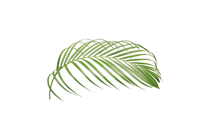 tropical green