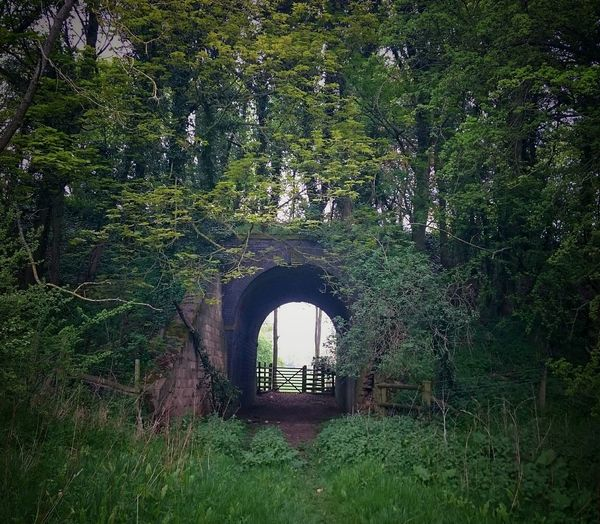 Nature Eeyemgallery Eeyem Nature Lover Eeyem Photography EyeEm Best Shots Trees Nature Photography Countryside Into The Light Tunnels Abandoned Places Abandoned & Derelict Abandoned Abandonedplaces Overgrown And Beautiful Overgrowth Overgrowth And Unmaintained Overgrown Undergrowth