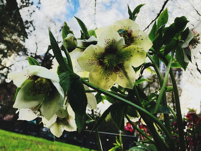 Flower Growth Freshness Nature Fragility Beauty In Nature No People