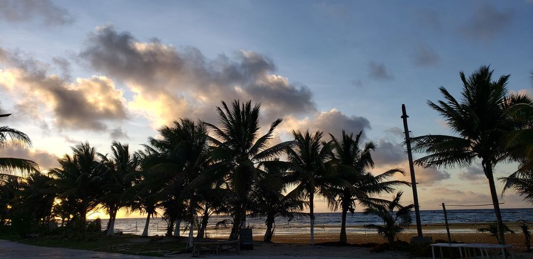 The Traveler - 2019 EyeEm Awards Tree Water Palm Tree Multi Colored Beach Sunset Sea Tree Area Dramatic Sky Sky