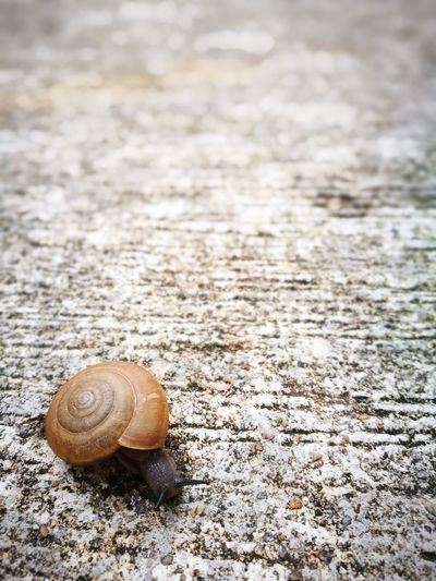 Snail Snails