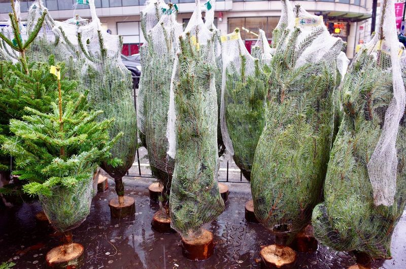 Wrapped christmas trees for sale Outdoors Urban Street Christmas Trees Wrapped For Sale Weihnachten Weihnachtsbäume Christmas Trees Day