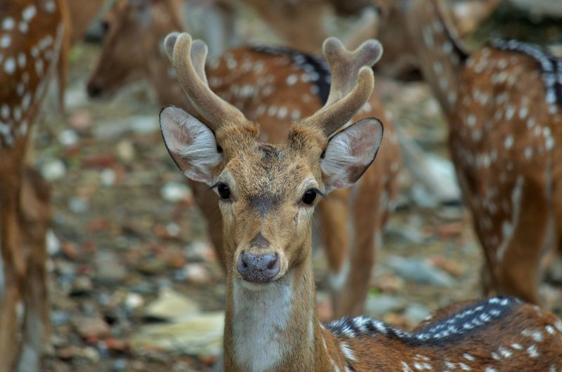 Close-up portrait of a deer