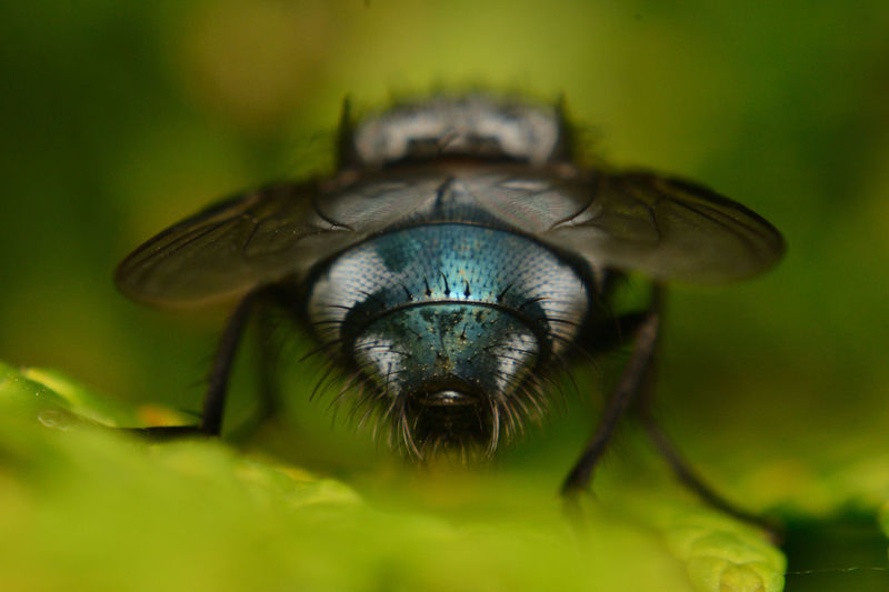 The Fly Animal Themes One Animal Animal Animal Wildlife Animal Body Part Close-up Animals In The Wild No People Nature Extreme Close-up Plant Eye Outdoors Front View Animal Wing Animal Head  Macro Day Vertebrate Green Color Animal Eye