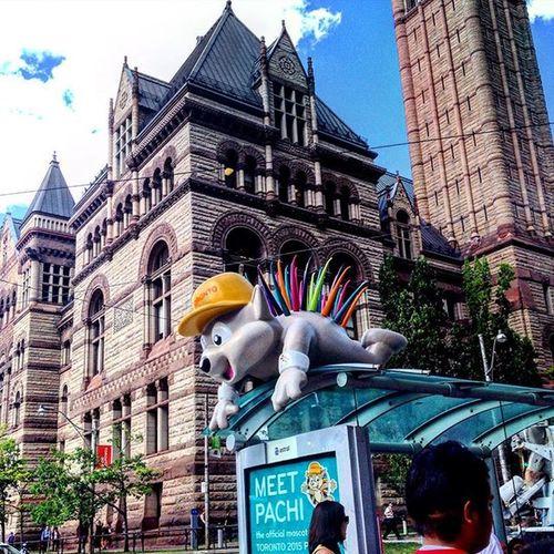 Pachi Torontomascot PanAmGames HostCity2015 PanAm2015 Toronto2015 Porcupine Torontodope Thesix The6 The6ix 416 Panamania Viewsfromthesix Toronto_insta YYZ Panam 6ixside Tdot  To2015 Viewfrommycity