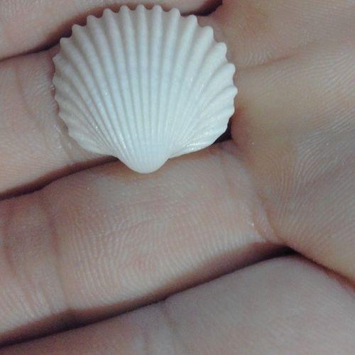 Concha  Blanca Perfecta Mar Mediterraneo Perla SPAIN Summer14 Verano Nice