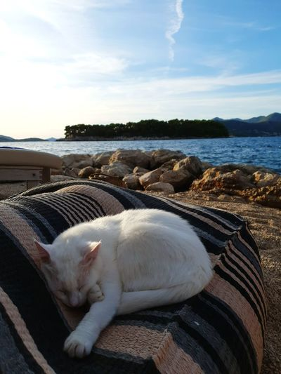 Cat relaxing on sea shore