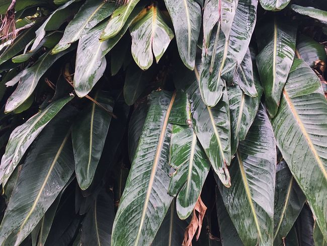 Growth Leaf Plant Part Plant No People Day Nature Wet Freshness Beauty In Nature