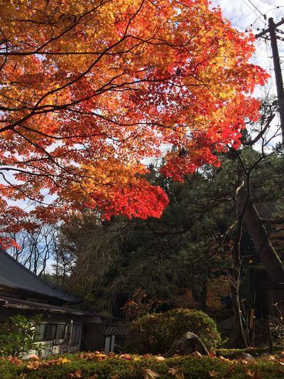 Autumn Colors Pokok-pokok ڤوكوق٢ Kuil كويل