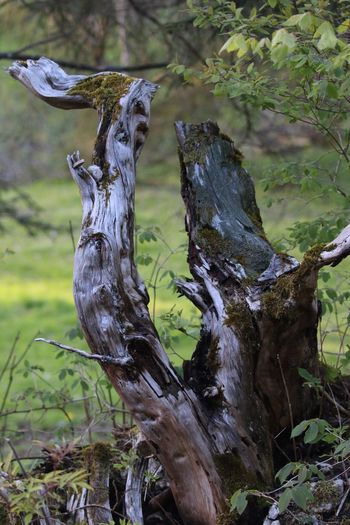 Tree Trunk No People Dead Plant Outdoors Beauty In Nature Tranquil Scene