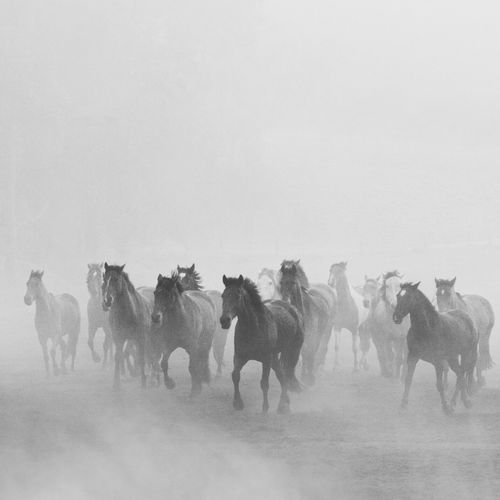 When you go through your archives and find gems like this. Horses Fog Capture The Moment Learn & Shoot: Simplicity The Great Outdoors With Adobe