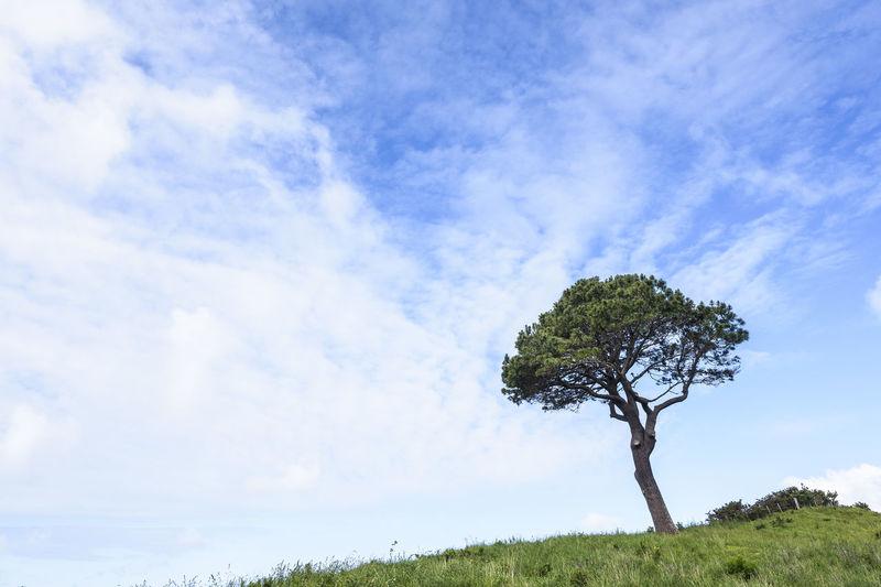 Single tree on landscape against blue sky