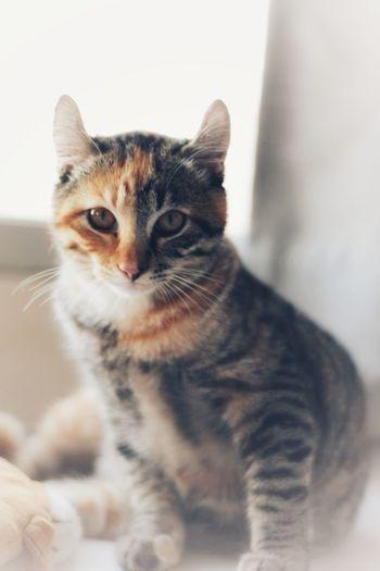 🐱 Tabby Cat Cat Ginger Cat Stray Animal Persian Cat  Animal Eye Siamese Cat