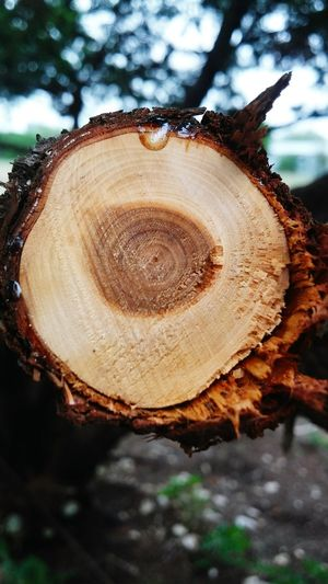 Tree Tree Ring Nature Close-up Timber Textured  Brown Outdoors No People Forest Wood - Material