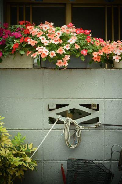 生きる 日常 Life Force Flower Nature Plant Bycicle Streetphotography