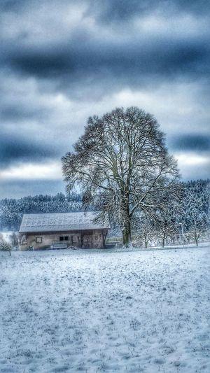 Traumlandschaft... Snowlandscapes Snow Day ❄ EyeEm Nature Lover Winter Trees Winterwonderland Nature_perfection Deepfreeze
