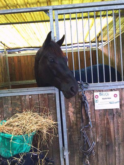 Horse Riding Dressage Nationalcompetition Fürst Diamond 👑💎