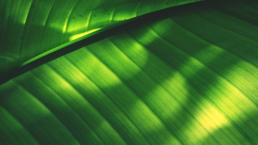 Pattern Pieces Leaves Sun Light Natural Light Shadows & Lights Green Nature Details Clorophilla Nature Textures Textures And Surfaces Paterns In Nature Green Leaves Paterns EyeEm Best Shots