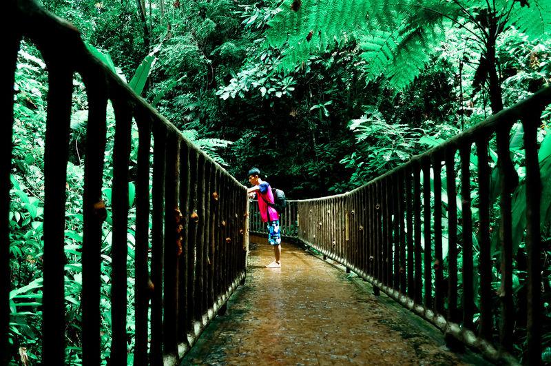 Side View Of Man On Footbridge Amidst Trees
