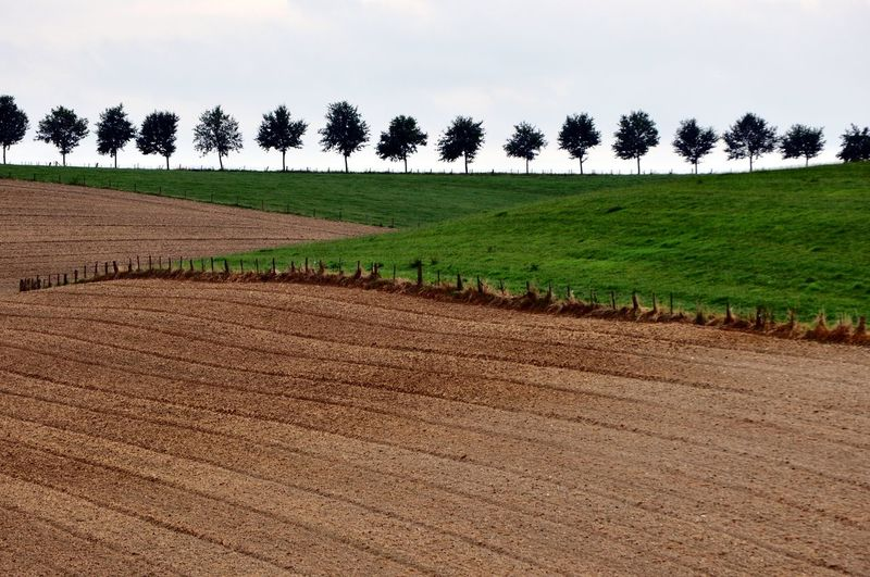 Landscape Environment Land Rural Scene Field Tranquil Scene Plant Agriculture Tranquility Scenics - Nature Tree Sky No People Growth Beauty In Nature Nature Farm Day Grass Plough Outdoors Plantation