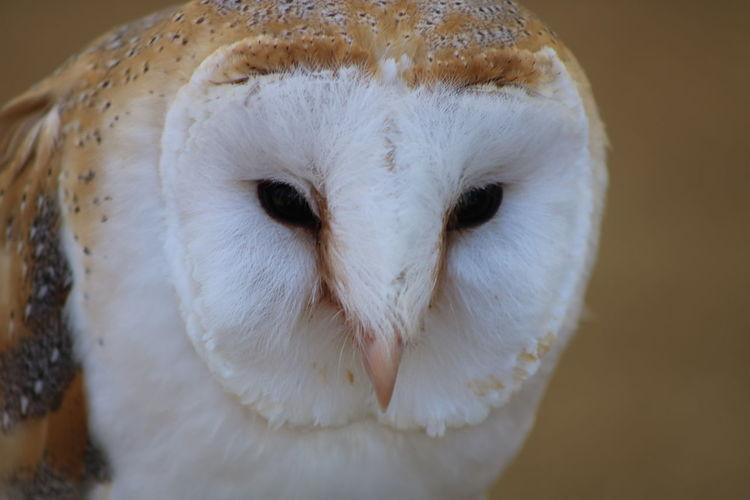 HEAD Eye Bird