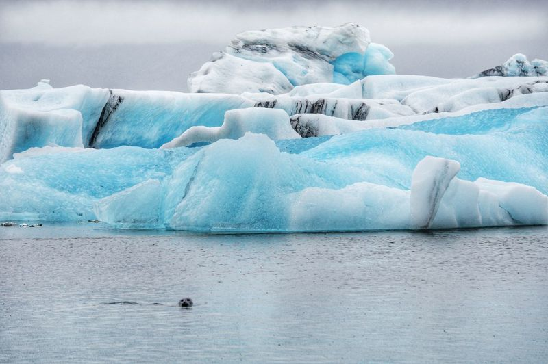 Scenic view of ice floating and seals at sea in iceland