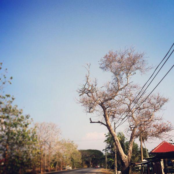 Tree Untitled