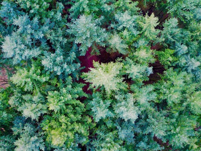 Top view Djimavic Dji Nature Growth Green Color Tree Beauty In Nature Day Plant Outdoors No People Ivy Tree Forest Arial Shot