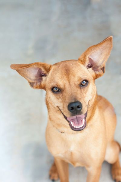 Always happy to see you! www.rescueonespringfield.com Dog Woof Need A Friend