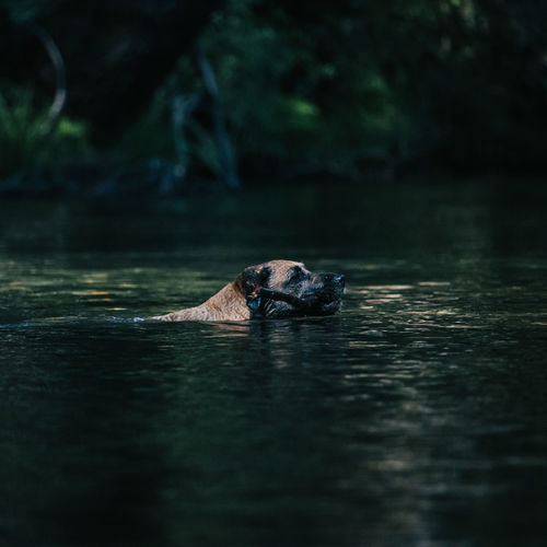 View of dog swimming in lake