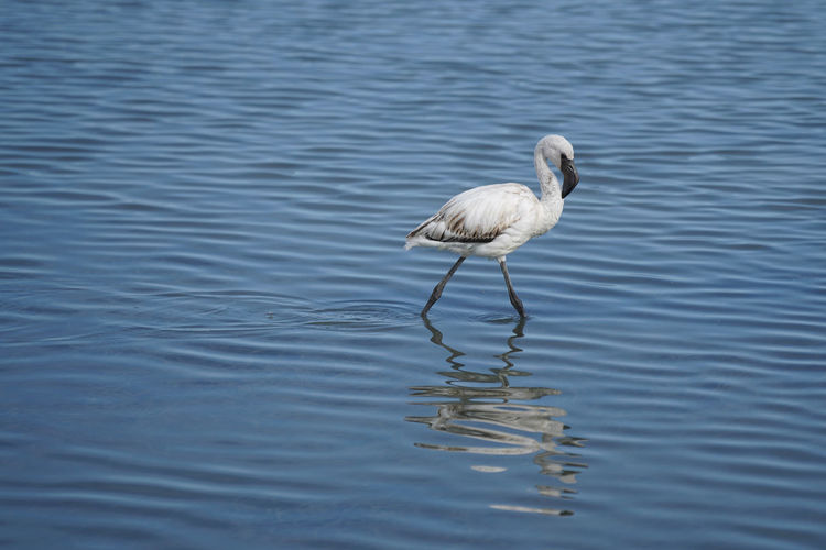 Bird in a lake