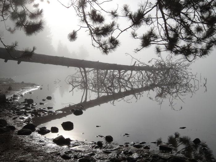 Algonquin Algonquin Park Algonquinprovincialpark Branch Foggy Foggy Day Foggy Morning Foggy Weather Lake Misty Misty Day Misty Forest Misty Landscape Misty Morning Misty Mornings Mistymorning Nature Reflection Tranquility Tree