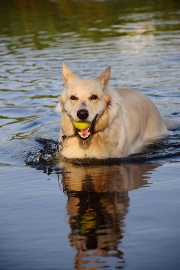 Portrait of dog in lake
